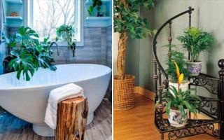 Идеи вашего дома: Растения как элемент декора: создаем из квартиры оазис уюта и спокойствия