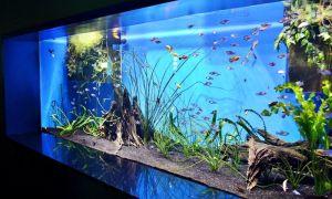Что нужно знать перед тем, как покупать аквариум