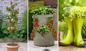 Идеи вашего дома: Огород без забот: 5 практичных советов, как создать контейнерный огород или мобильный фруктовый сад