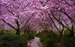 Что должно быть на каждом участке: 5 основных правил планирования сада