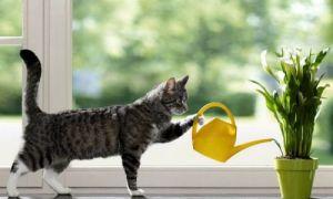 Идеи вашего дома: Как осуществить полив растений в свое отсутствие, чтобы ни у кого не просить помощи
