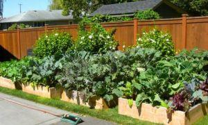 Огород своими руками: 11 фото для вдохновения