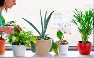 Какие 6 лекарственных растений необходимо иметь в доме
