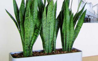 Как выбирать удобрения для комнатных растений?