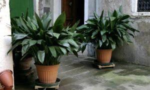 6 ошибок при уходе за домашними растениями