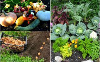 Идеи вашего дома: 10 правил овощного «добрососедства», которые гарантировано приведут к хорошему урожаю