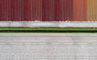 Яркие тюльпановые поля Голландии в объективе Тома Хегена