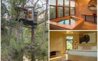 Архитектура: Настоящий дом на дереве, который не уступит в комфорте любому коттеджу