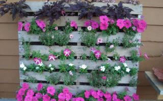 Домашний сад на балконе из палет своими руками